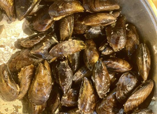 Try fresh mussels during Istanbul night tour